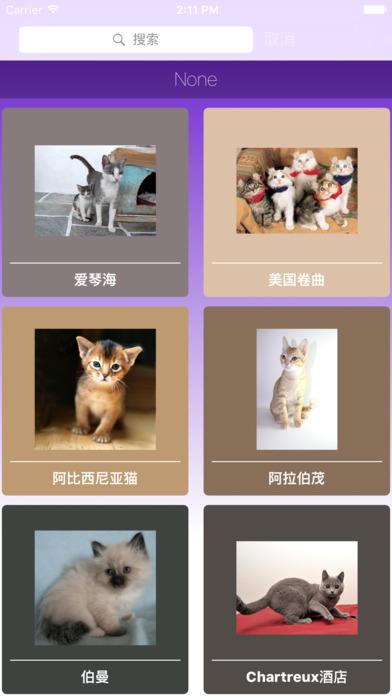 通过不同品种的小猫