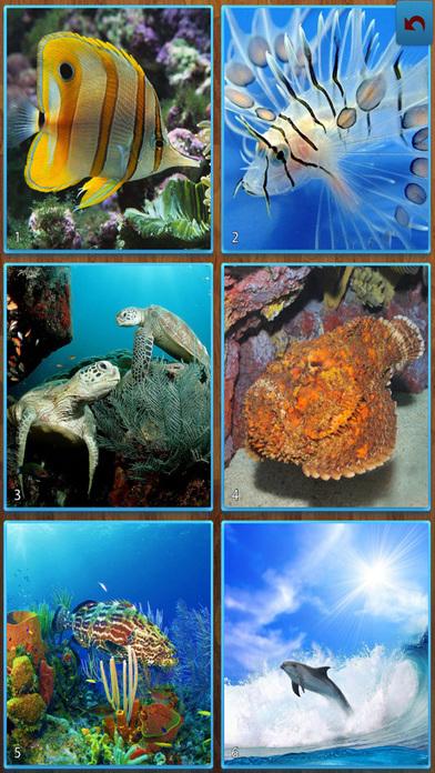 海洋鱼类拼图