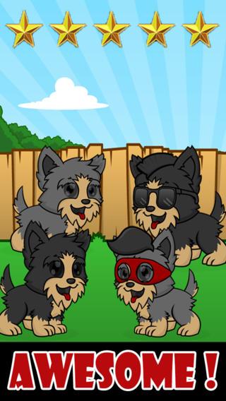 約克犬小狗趣味運行 - Yorkie Pup Fun Run
