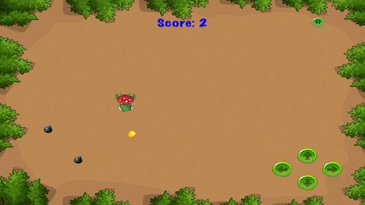 龟定时炸弹运行 - 快速动物生存游戏 免费
