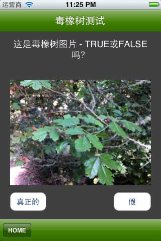 毒橡树测试