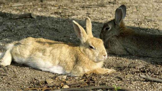 兔子的写真集