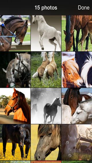 99 Wallpaper.s - 漂亮的壁纸,背景和马,小马图片和 宠物