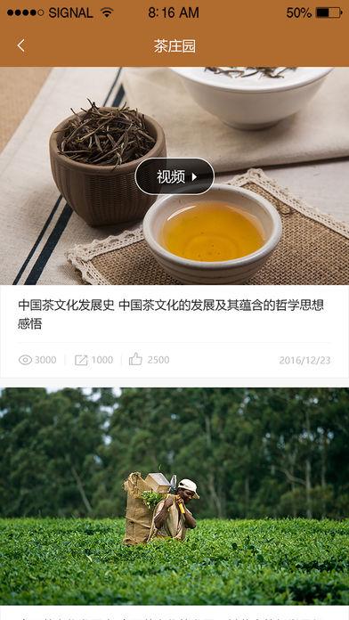 一棵古树茶