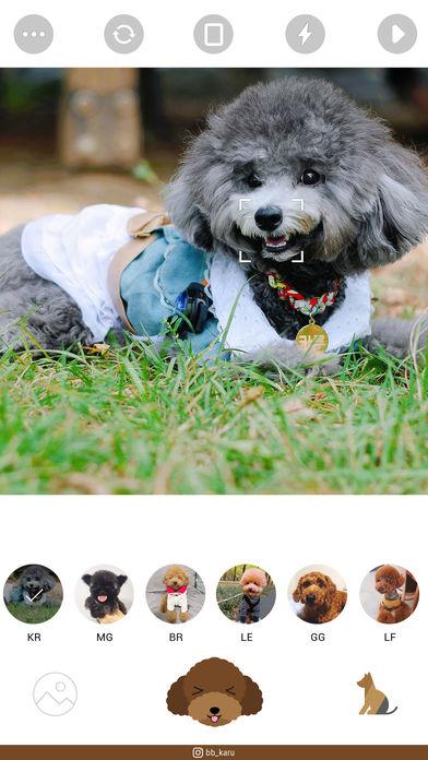CoCo for 贵宾犬