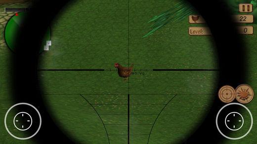 经典农场鸡拍摄