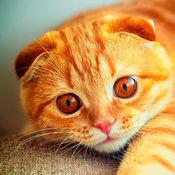 猫壁纸 1