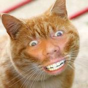 甲級! Cat Me! 2.2