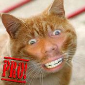 猫我临 Cat Me Pro