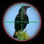 Crow Attack City : Bird Hunting 1