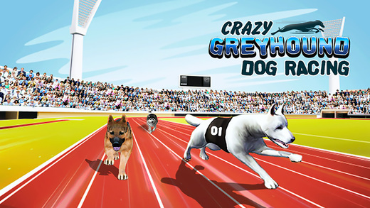 Crazy Greyhound Dog Racing