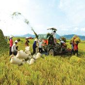 Hỏi và đáp - Nông nghiệp