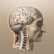 经典解剖学 1.1.2