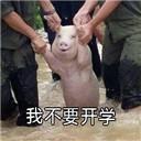小猪不想开学表情包无水印版