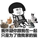 你根本不爱我只是为了撸我的猫表情包