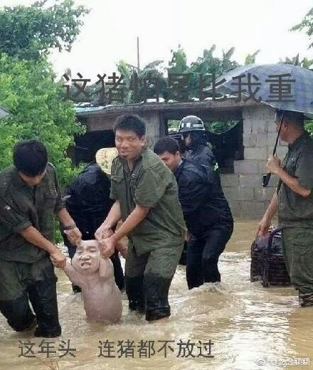 网红小猪图片