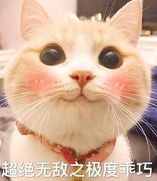 网红bobi猫表情包(猫咪乖巧表情包)
