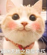 可爱猫咪图片...