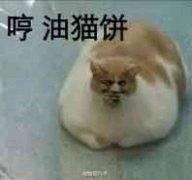 油猫饼表情包