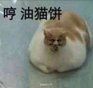 油猫饼表情包 PC版
