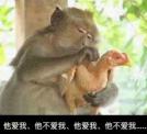 猴子拔鸡毛表情包无水印
