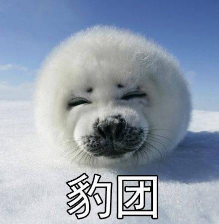 豹笑表情包