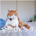 喵星人日语表情图片无水印 【完整版】