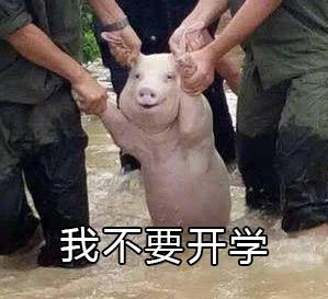 网红小猪我不要开学表情包