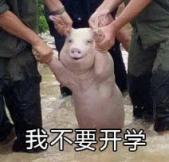 网红小猪我不要开学表情包 PC版