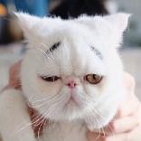 高冷猫咪表情包