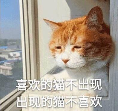 生无可恋可爱猫咪表情包