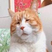 生无可恋可爱猫咪表情包 无水印版