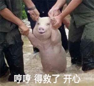 别tm揪耳朵了救小猪表情包