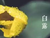2017白露二十四节气高清图片 PC版