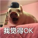 猪猪我觉得不行...