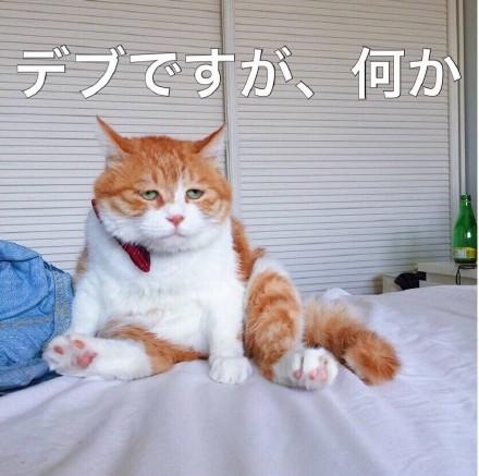丧猫日语表情包无水印