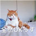 丧猫日语表情包...