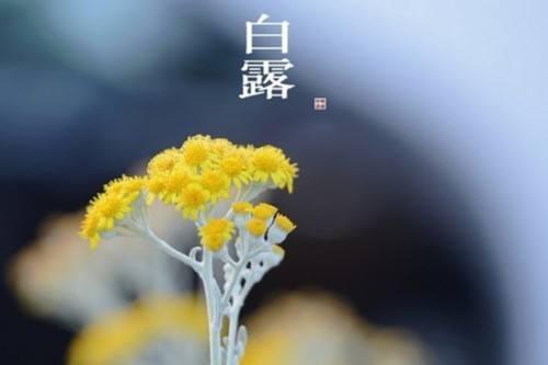 2017白露节气图片