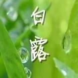 白露小清新温馨...