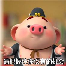猪小屁表情包第二弹图片