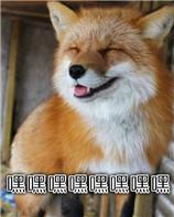 小狐狸可爱表情包无水印