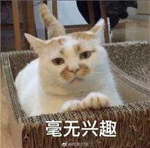 油牌猫表情包无水印版 【完整版】