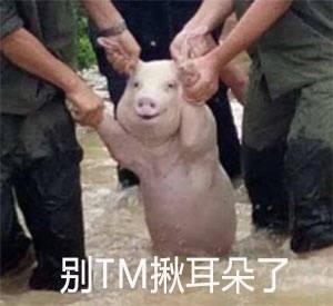 洪水猪微笑表情包