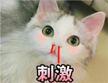 可爱猫猫表情包无水印版