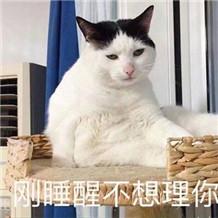 刚睡醒不想理你猫表情图片