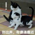 别出声有傻逼靠近猫咪表情包无水印