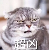 我叫起来超凶的猫咪表情包无水印 无