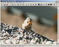 XnView(图像查看器) v2.43 完整版