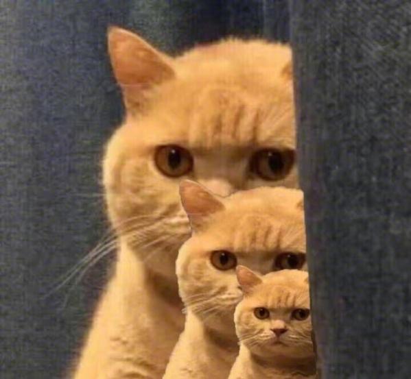 橘猫表情包