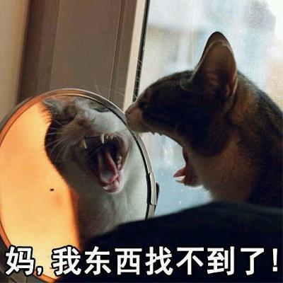 猫喊妈表情包